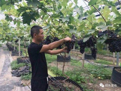 为啥?桐乡男子当了18年人民教师后突然辞职做农业