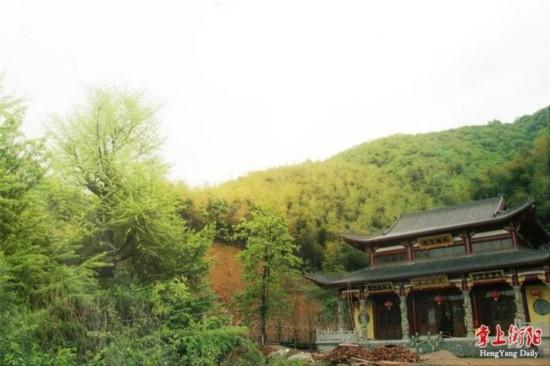 """湖南衡阳出现""""银杏树王"""" 经鉴定树龄在1500年以上"""