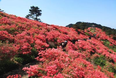 三合山花海风景区